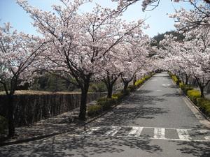 お花見ドライブのサムネール画像