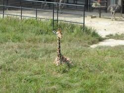 動物園2のサムネール画像