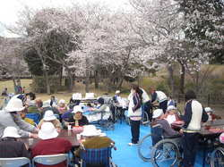 花見201104②